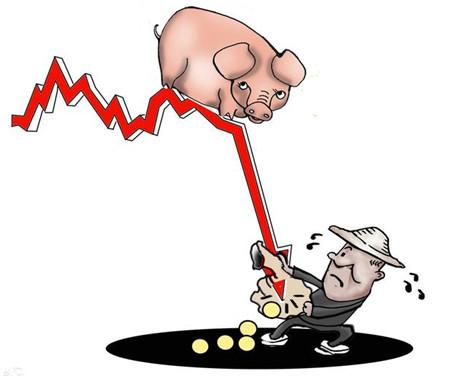 农村养猪把握住这两点,挣钱就是很简单的事了