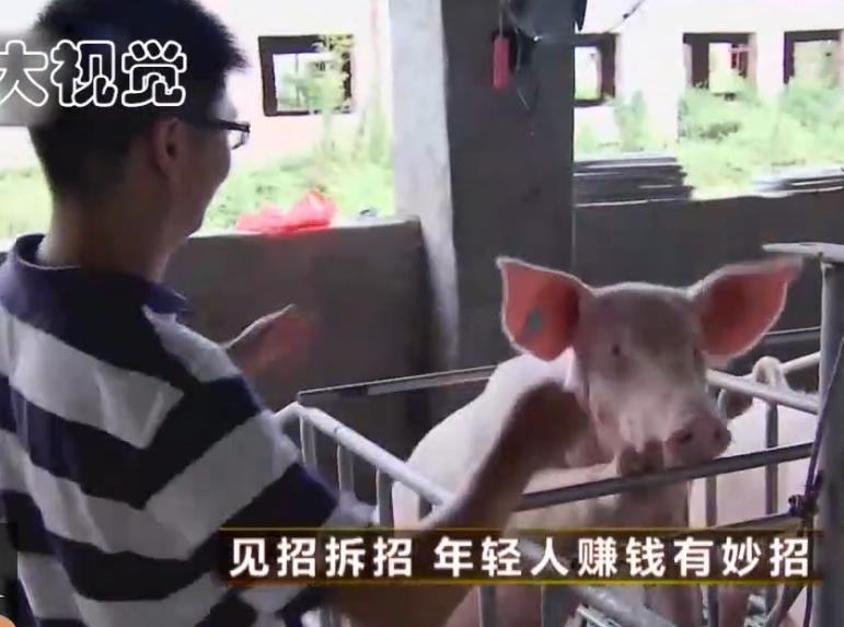 农村大学生被迫无奈回家养猪,磨难三年终于成当地龙头企业