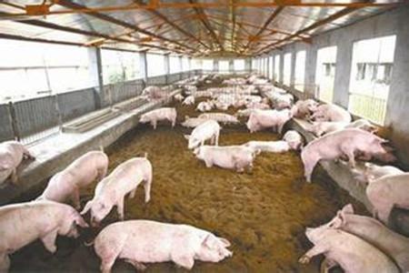 猪场改扩建时必须有整体全局观念