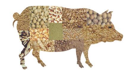 猪价下跌+原材料上涨 养猪户好日子又到头了?