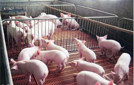 小型养猪场的生产工艺流程是什么样的?