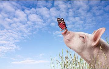 下跌区域开始减少了  这是猪价要上涨的节奏吗
