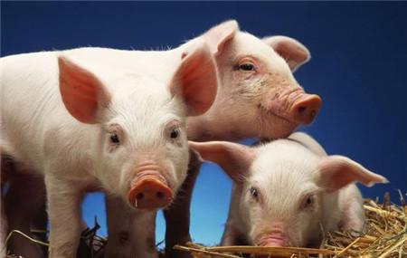 2018年1月17日(20至30公斤)仔猪价格行情走势