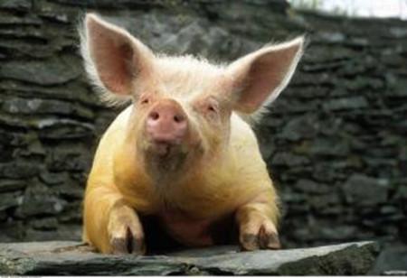 2018年01月20日全国外三元生猪价格行情涨跌表