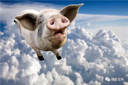 适当补栏仔猪,一头猪多赚200块钱不是问题