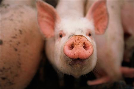 2018年01月21日全国外三元生猪价格行情涨跌表