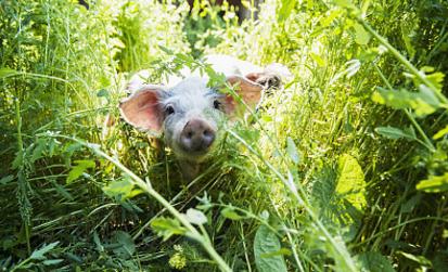 农业部:中国兽药残留超标问题综合治理取得积极成效