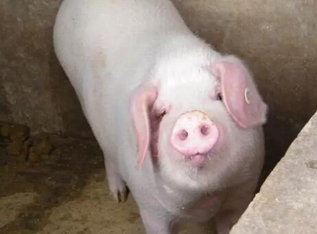 2018年01月23日全国外三元生猪价格行情涨跌表