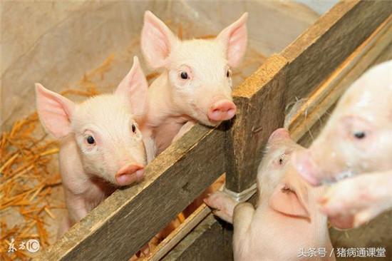 2018年1月23日(20至30公斤)仔猪价格行情走势