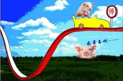 生猪价格上涨遇瓶颈  猪友万不可过度赌市