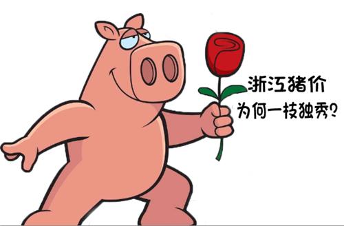 全国大范围猪价都在跌,浙江猪价为何却一枝独秀?
