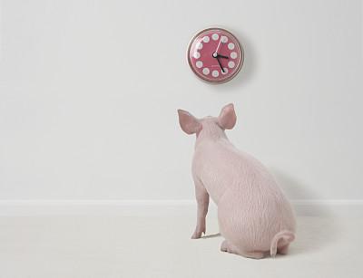 将猪养好,再来谈猪价!利润已经有了,只是多少罢了!