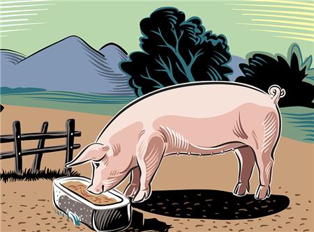 """猪价下跌不要紧,饲料价格走向""""价格跌两年涨一年""""的怪圈"""