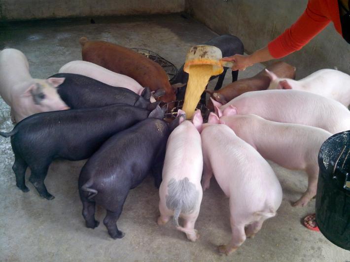 2018年1月31日,全国主产区外三元生猪均价14.25元/kg,较昨日跌0.20元/kg。生猪价格最高地区浙江,均价15.5元/kg,最低地区为黑龙江,均价13.1元/kg。