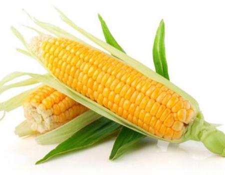 猪价断崖式下跌,玉米却有望大涨,养猪户怎么办