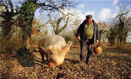新希望六和2018年86.7亿再布局养猪业 越南也有份