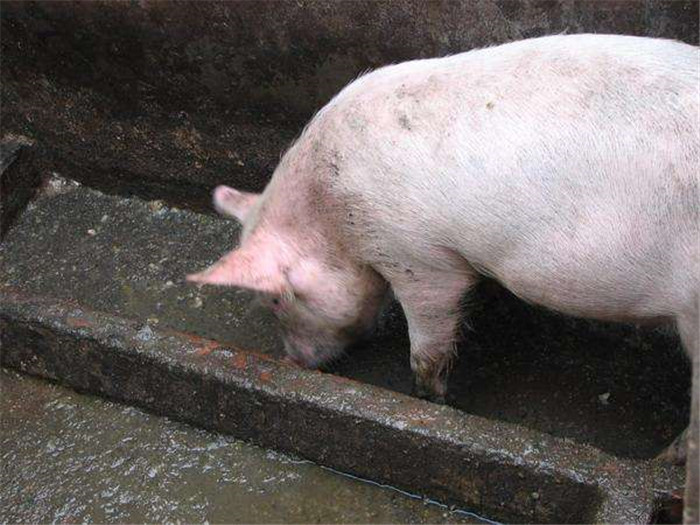 料槽不用买,一块水泥板简单改造 耐用喂猪也方便