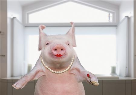 生猪出栏均价继续大幅度下跌 请养殖户不要抛售