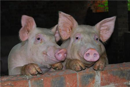2017超过10万家猪场被拆,减少1700多万头生猪!