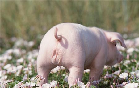 别只盯着猪价了!这现象显示2018年小散户赚钱恐更加困难