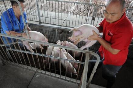 2018年奥特奇全球饲料调查估计世界饲料产量连续2年超过10亿吨