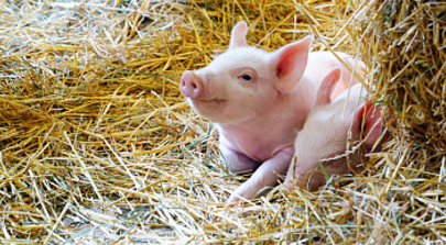"""农产品""""超级并购""""临近敲定:ADM收购邦吉的交易最快本周宣布"""