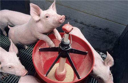 猪价大幅下跌 头均盈利缩水超150元