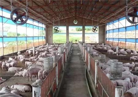 什么样的猪场栏舍环境才是最好的?