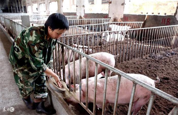 养猪难,难于上青天,做好三点养猪有何难?