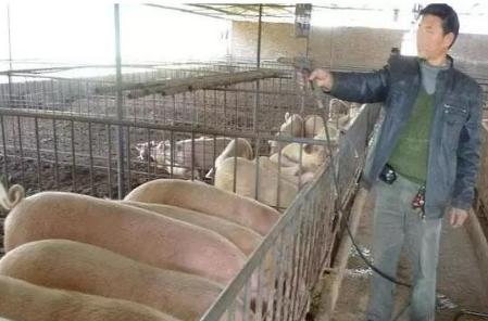 一位久经猪场的老兽医谈猪饲料,句句在理!