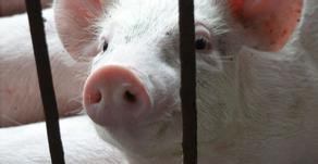 欧盟委员会(EC):动物福利对农业生产商的影响有限