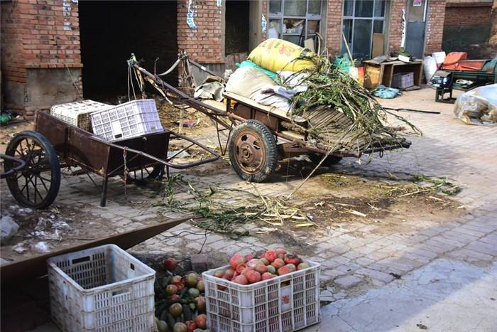 """大哥说,不光是养猪犯愁,蔬菜大棚里面的西红柿,也是一样的卖不上价,每年这个时候会有小贩子来收购,今年修路不好走,没人来。这么冷的天,拉到城里的市场上,才卖一块多钱一斤。大嫂在大棚里忙活了一冬天,快过年了,大棚里面的西红柿卖不了,好多都烂掉了,你看院里堆着的都是冻了烂了的西红柿。     揭秘方便面包装上的3大谎言  飞机万米高空外惊现这一幕!  废弃房屋臭气熏天消防员看后  村民做同一怪梦,因古树作祟  印度最重公牛值千万爱喝威士  集齐这5枚硬币就能换一辆车  嫌嫁妆太少男子竟对妻做这事  儿子打工回家后竟成了女儿  """"心急宝宝""""医院走廊诞生  女子狂减250斤反被男友甩  女子打差评后收到这吓人包裹  她因拍了张全家福 毁了一生  世界上真实存在的5位超能力者  中国在`鬼门关`挖了条隧道  这国泼水节看到姑娘直接抱走  揭秘方便面包装上的3大谎言  飞机万米高空外惊现这一幕!  废弃房屋臭气熏天消防员看后  村民做同一怪梦,因古树作祟  印度最重公牛值千万爱喝威士  集齐这5枚硬币就能换一辆车  嫌嫁妆太少男子竟对妻做这事"""