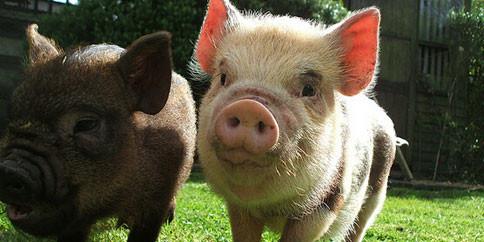 新牧网综合央广网、农业部猪肉出厂价格监测月报