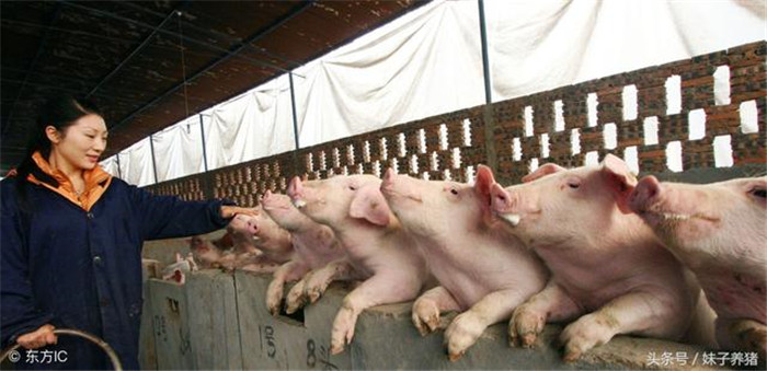 """1、""""不怕狂风一片,只怕贼风一线"""",说的养猪不怕整个风吹猪,但是就怕缝隙里面出来的风造成受风不匀;其实这种情况现在看确实非常重要,很多疾病都是温差造成的,比如降温的时候就容易流感、口蹄疫、传染性胃肠炎,地面湿的时候容易拉稀;尤其是进风引起的呼吸道如果出现了混感,那养猪人损失可就大了;"""