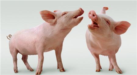 过年看点有内容的!透视猪价的规律与变局