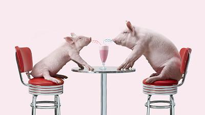 80后许冠创新产业扶贫模式,带领贫困户养果蔬猪致富奔康