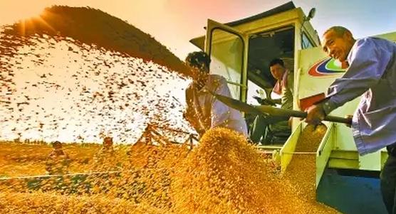 补贴机制? 保护政策? 改革如何推向纵深保障农民收益?