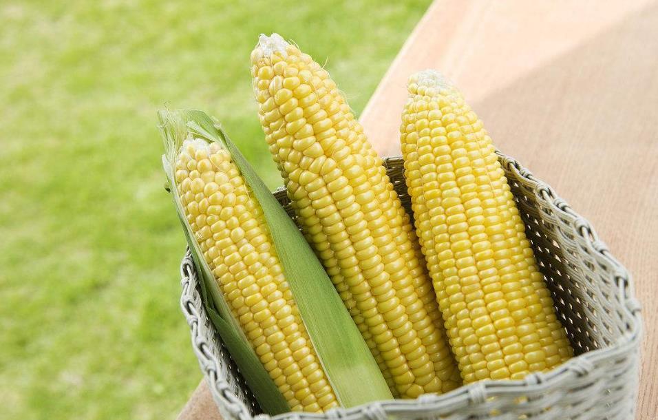 2018年02月15日全国玉米价格行情走势汇总