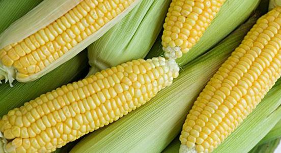 2018年02月16日全国玉米价格行情走势汇总