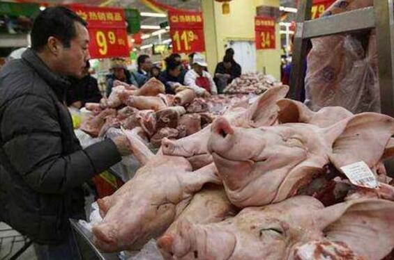 每年有1200万头母猪流向市场,后来都去了哪里?