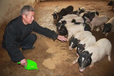 猪场里面使用的小猪料利润有多高,养猪人知道么?