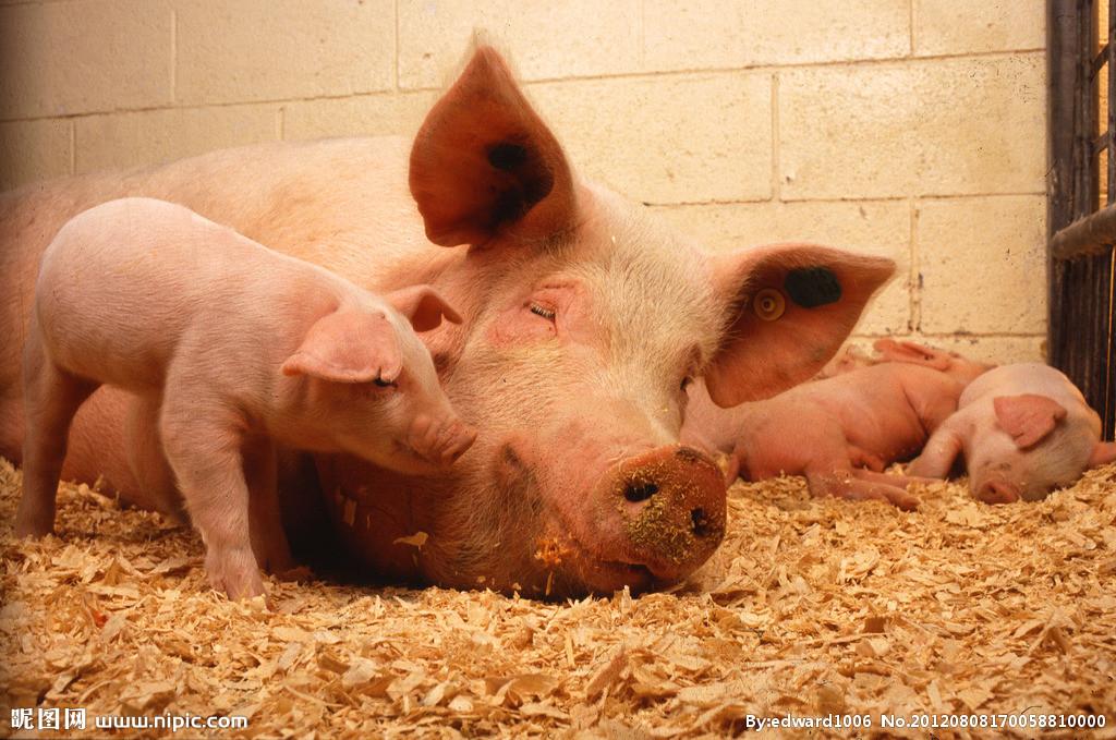 2018年02月19日全国内三元生猪价格行情涨跌表