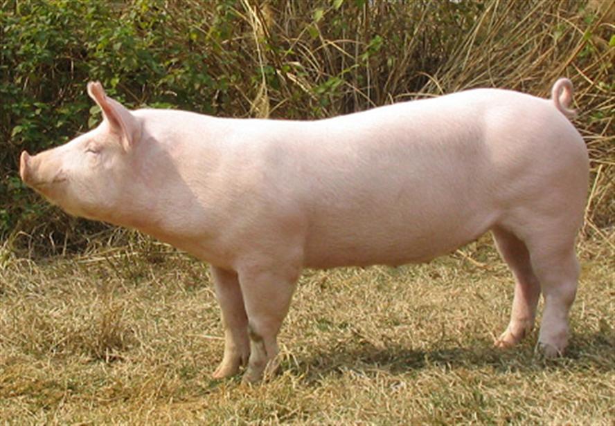 2018年02月19日全国外三元生猪价格行情涨跌表