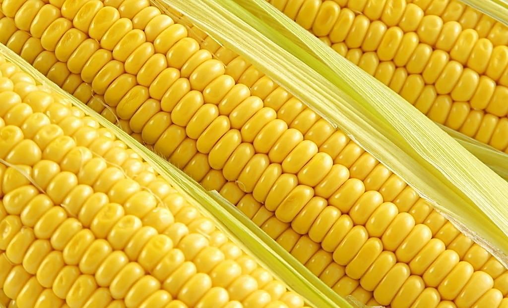 2018年02月19日全国玉米价格行情走势汇总