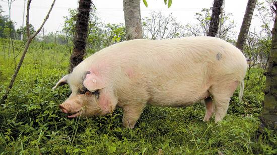 2018年02月20日全国内三元生猪价格行情涨跌表