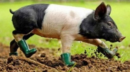 2018年02月21日全国内三元生猪价格行情涨跌表