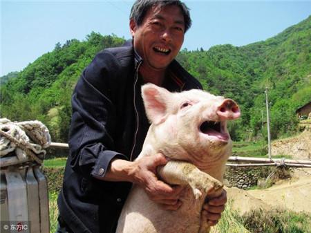 养好猪的关键是什么?看看养猪专业户怎么说!