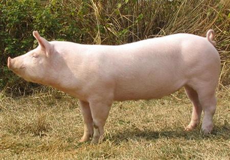 2018年02月23日全国土杂猪生猪价格行情涨跌表