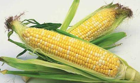 2018年02月24日全国玉米价格行情走势汇总