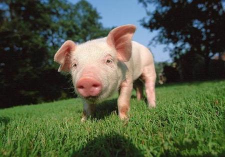 2018年2月24日(20至30公斤)仔猪价格行情走势